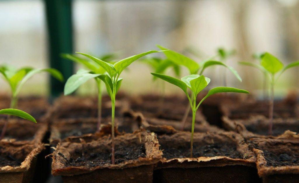 Gardening, cheap hobby idea